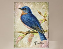 View Bird Card Bluebird
