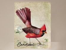 View Bird Card Cardinal