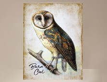 View Bird Barn Owl Card
