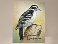 View Downey Woodpecker Card