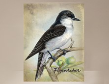 View Flycatcher Bird Card