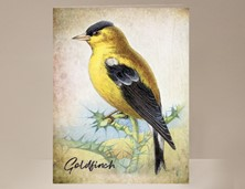 View Goldfinch Bird Greeting Card
