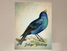 View Indigo Bunting Bird Greeting Card