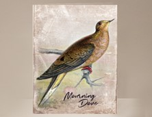 View Mourning Dove Greeting Card