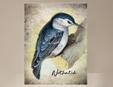 View Nuthatch Wild Bird Greeting Card