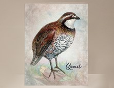 View Quail Greeting Card