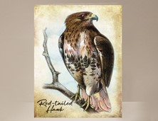 View Red-tailed Hawk Wild Bird Greeting Card