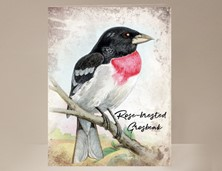 View Red-brested Grosbeak Wild Bird Card