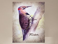 View Flicker Wild Bird Card