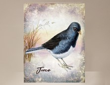 View Junco Wild Bird Greeting Card