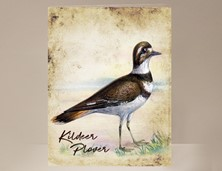 View Kildeer Plover Wild Bird Greeting Card