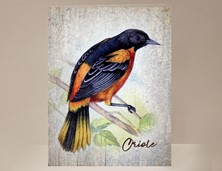 View Oriole Wild Bird Greeting Card