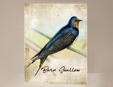 View Barn Swallow Greeting Card