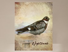 View Nighthawk Wild Bird Card