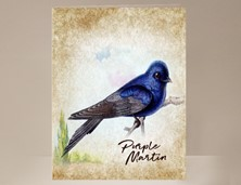 View Purple Martin Wild Bird Card