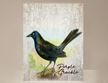 View Purple Grackle Wild Bird Card