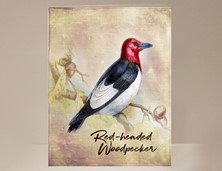 View Red-headed Woodpecker Wild Bird Card