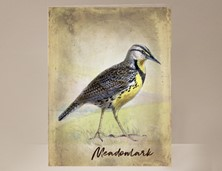 View Meadowlark Wild Bird Card
